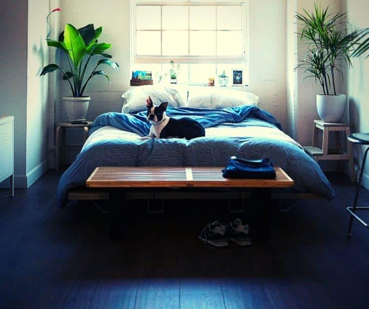 interior decor trends relaxing bedroom colors