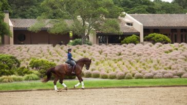 toyon farm napa valley equestrian estate and vineyard