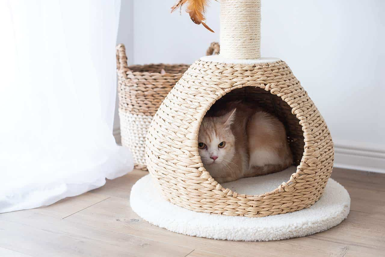 cutest cat condos on amazon
