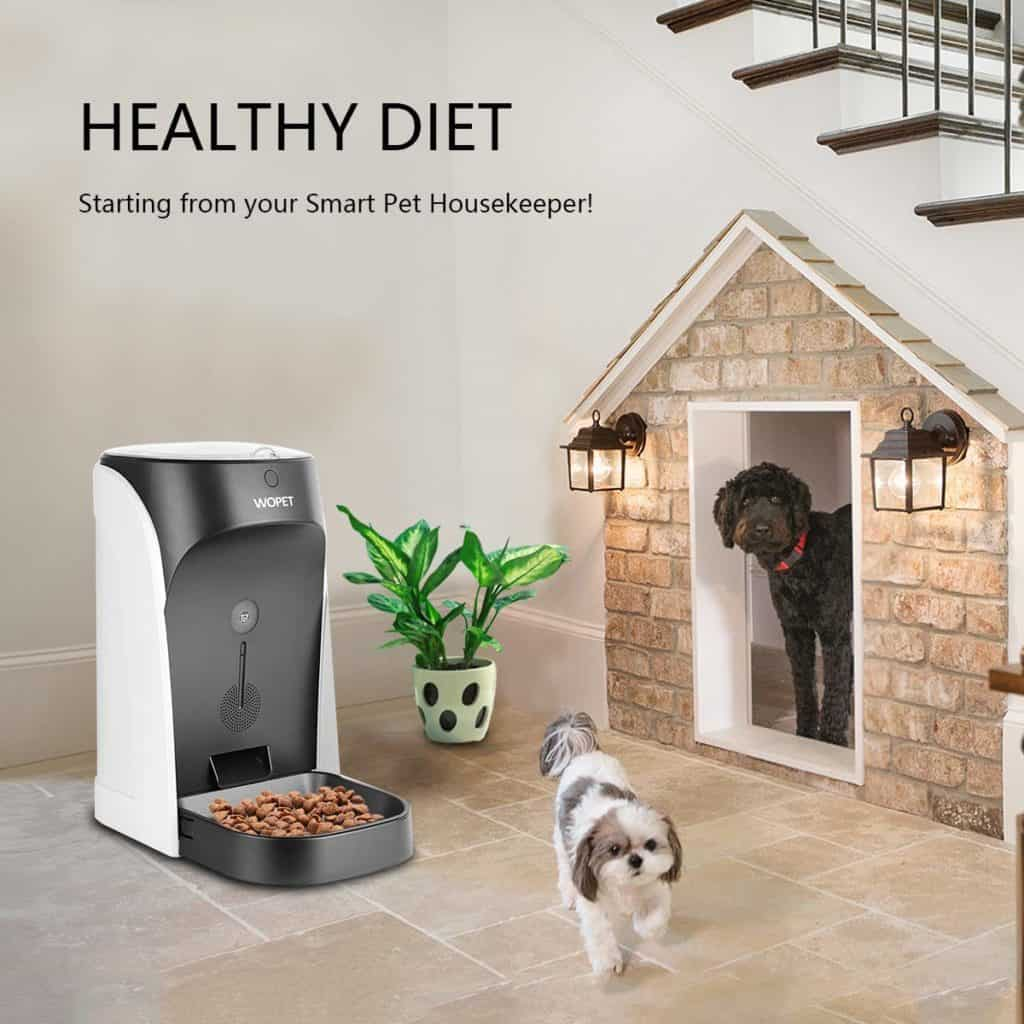 food dispensers for dogs and cats