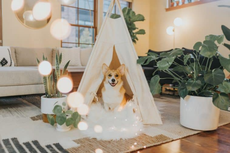 smart home devices for pets