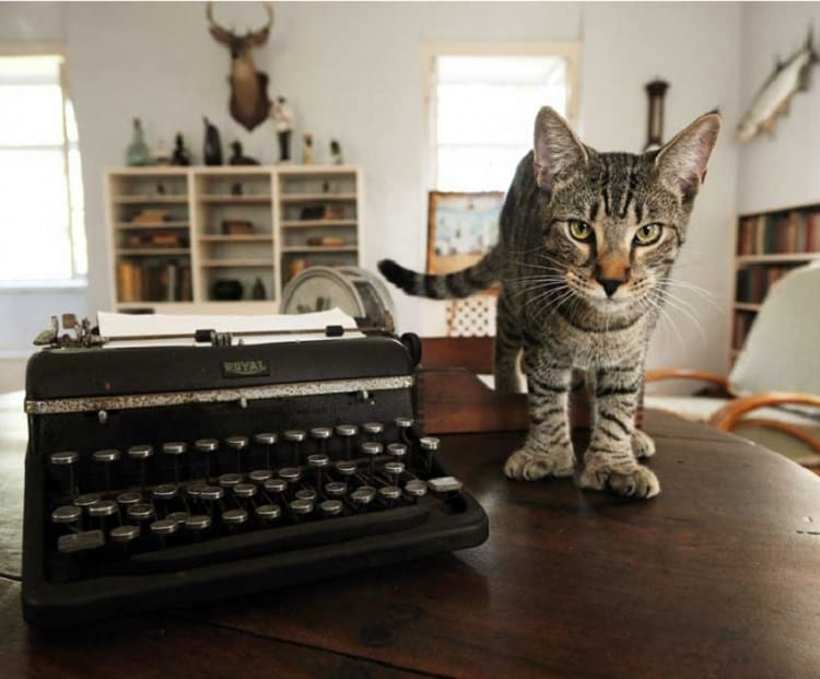 ernest hemingway's six-toed cats in his house in key west