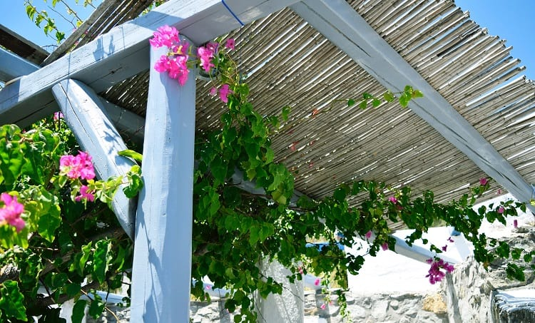 flower decorated pergola outdoor design