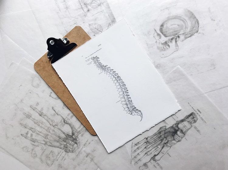 spine and back posture