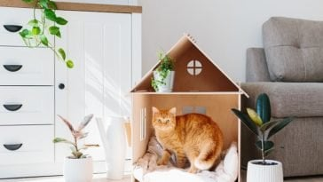 making a home more cat friendly