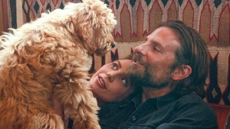 Jack and Ally at home, with their newly adopted dog (played by Bradley Cooper's real life dog, Charlie).